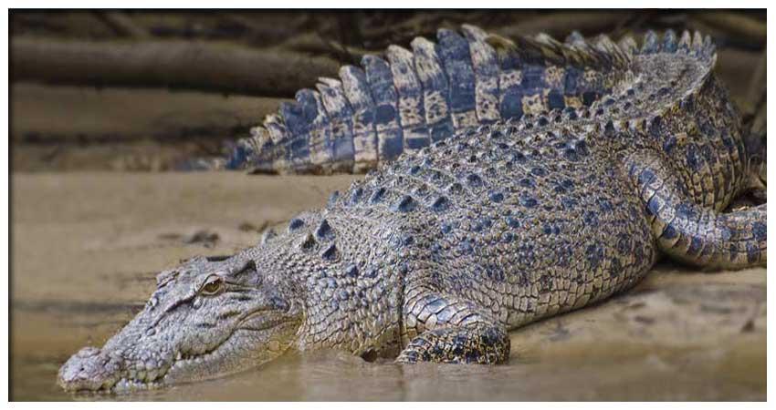 Crocodile Tour Jaco Costa Rica Jaco Premium Groups Costa Rica, Bachelor Parties Jaco Costa Rica, Vacation Rentals Jaco Costa Rica, Tours Jaco Costa Rica, Costa Rica Bachelor Parties, Group Discounts Jaco Costa Rica